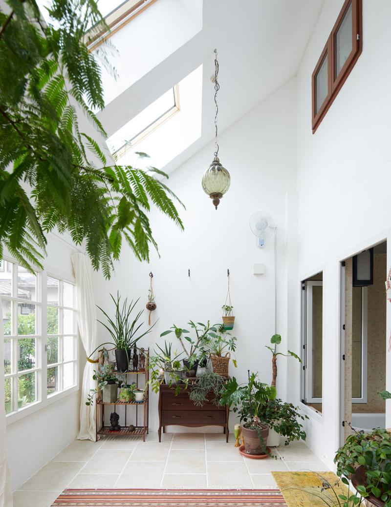 植物が家の中にあると、癒し効果や視覚疲労の回復が期待できる
