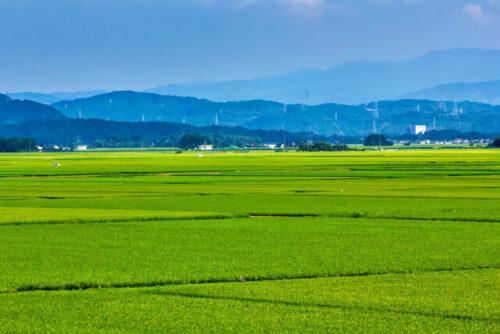 新潟の田園風景